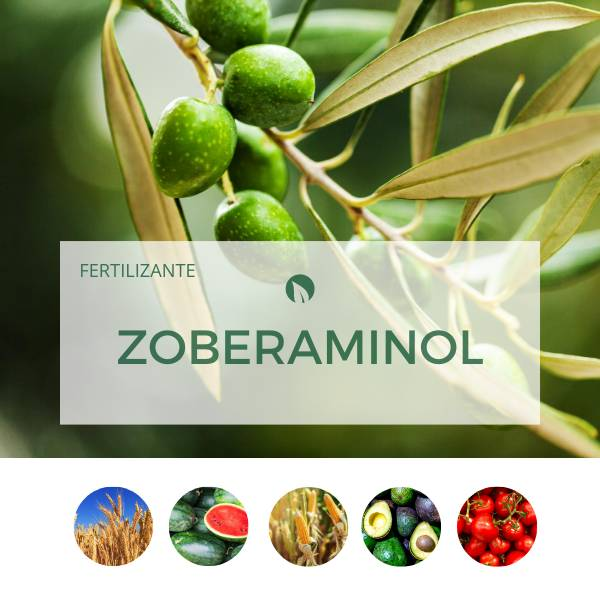 Zoberaminol Radicular