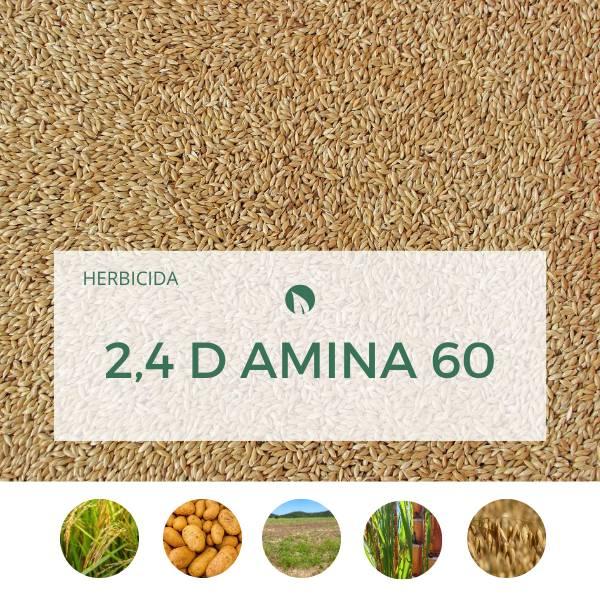 2,4 D AMINA 60