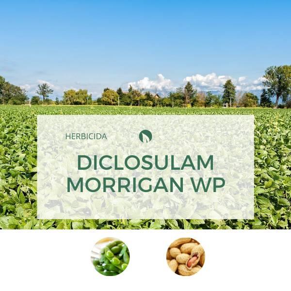 Diclosulam MORRIGAN WP