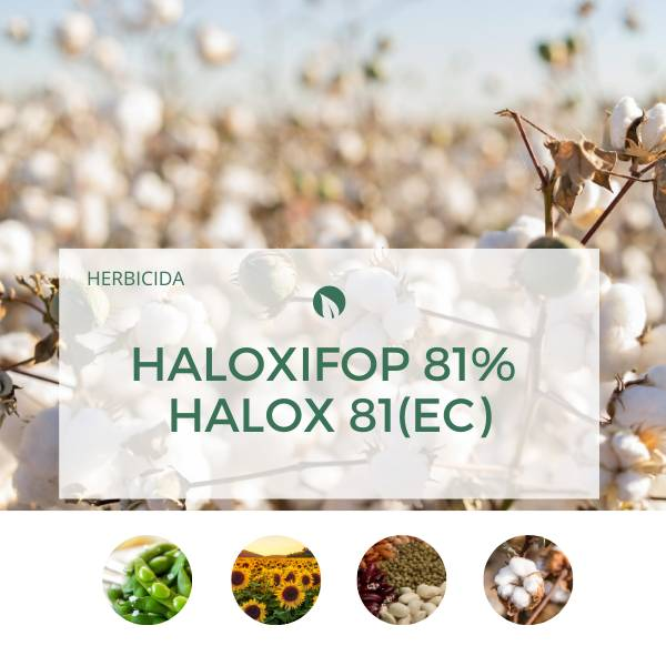 Haloxifop 81% – HALOX 81(EC)